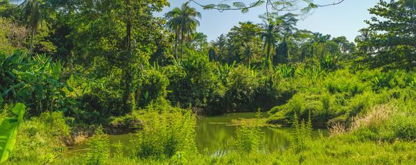 Panorama view of palm trees and dense tropical vegetation growing along the small river, Mu Koh Chang National Park, Chang island, Thailand
