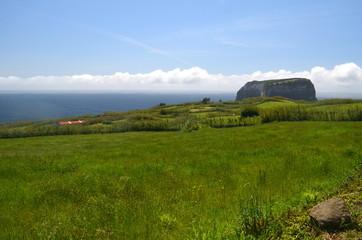 Azorska łąka