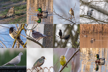 Collection set of spring birds. Animal film about small birds. Bird icons for websites.