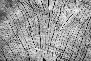 Old gray wood background texture.