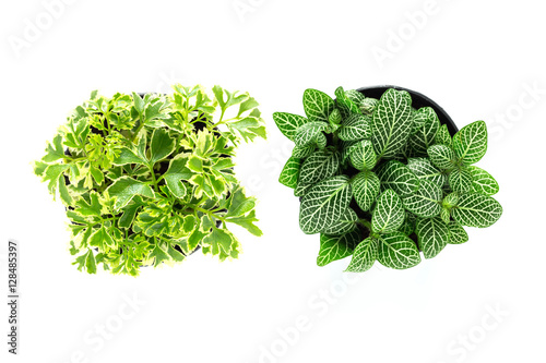 Top view of small plant pot on white background stock Best small office plants