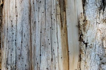 Bark surface. The surface texture of tree bark naturally.Tree.