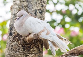 Pigeon bird are sick on tree branch