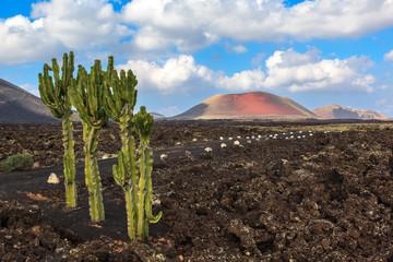 Volcanic landscape. Fire land.