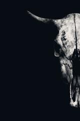 a bull skull on a black background