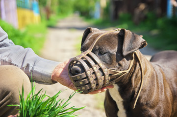 Muzzled dog. Training dog composition Wall mural