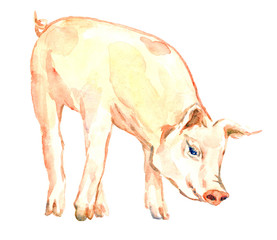 Cute pink piggy standing, isolated  hand painted watercolor illustration