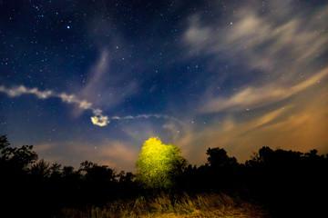 night scene in steppe