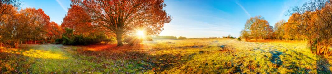 Panorama Landschaft mit Wald und Wiese im Herbst