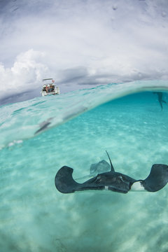 Stingray city - Cayman Islands