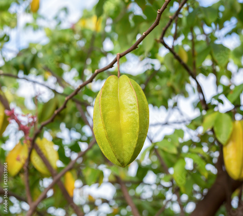 """""""Star apple fruit on the tree"""" Stock photo and royalty ..."""
