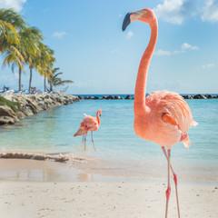 Foto op Canvas Flamingo Three flamingos on the beach