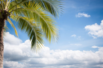 The Coconut Tree Under Blue Sky With Copy Space Area