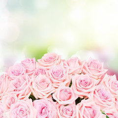 Pink blooming roses over bokeh garden background