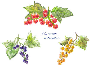yellow, red and black currant. Watercolor set