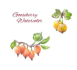 gooseberry watercolor