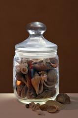 Jar with shells