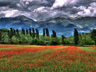 paesaggio italiano con campo di papaveri Wall mural