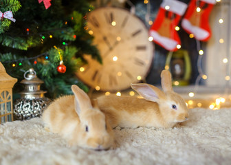 two fluffy hares under a New Year tree