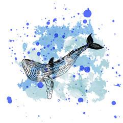 красочный эскиз татуировка кит