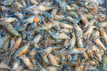 Fresh shrimp at the market,Thailand