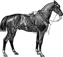 Vintage image horse