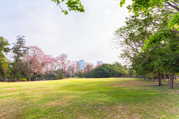 Beautiful green park landscape with urban background