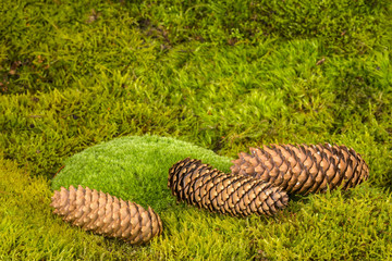a green moss textured background with cones
