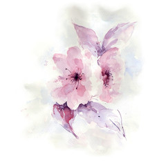 Hand drawn watercolor painting of delicate flowers. Beautiful fl