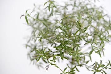 ティーツリーの葉