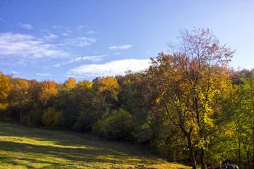 forest autumn landscape