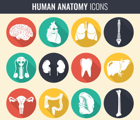Human internal organs. Anatomy set. Vector