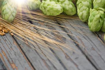 Green hops, malt, ears of barley and wheat