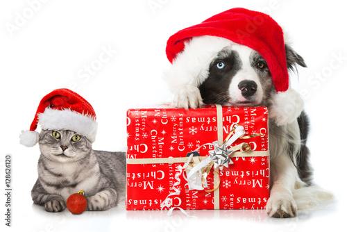 hund und katze mit weihnachtsgeschenk stockfotos und. Black Bedroom Furniture Sets. Home Design Ideas
