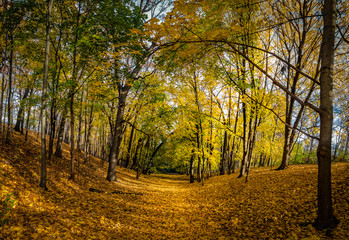 Autumn walkway of High Park covered with orange leaves - Toronto, Ontario, Canada