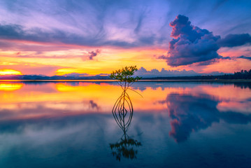 Wall Mural - Silhouette of Mangrove in sea at sunset background.