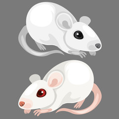 Laboratory white albino rat. Vector animal