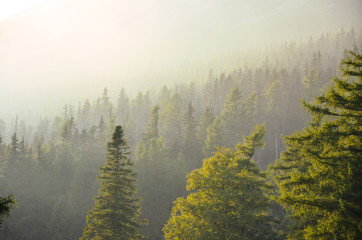 Beautiful warm soft light of the summer evening in misty forest. High Tatras, Slovakia