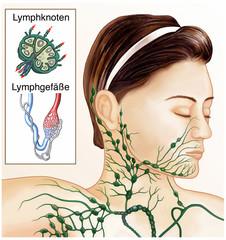 Lymphe seitlich am Hals
