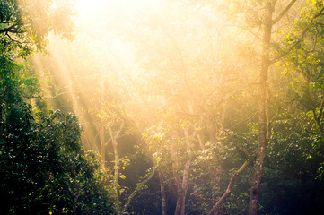 Rays of sunlight with trees  Wall mural