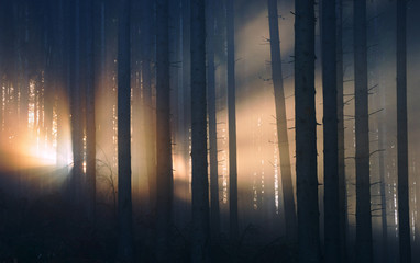 Sunlight in foggy forest