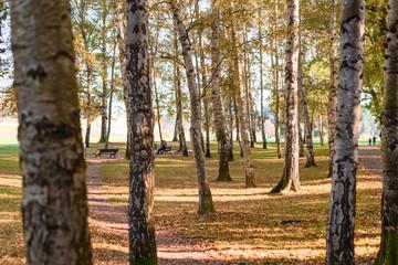 Herbstspaziergang im Birkenwald