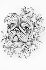 Pug dog sketch in colors of white background.