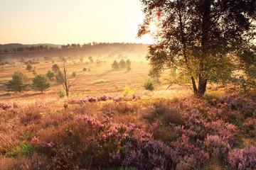 bright golden sunrise over heathland