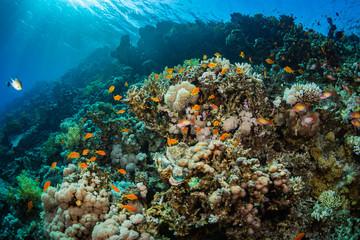 Deurstickers Onder water Tropical fishes
