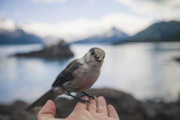 Garibaldi Provincial Park, British Columbia, Canada.