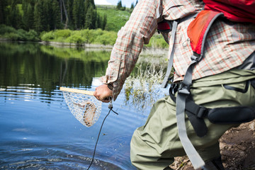 A fly fisherman pulls a fish out of the water with a net.