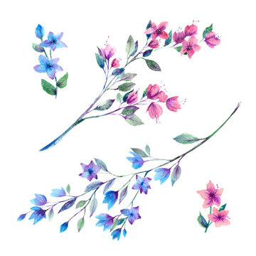 Watercolor painting. Pink and blue floral sprigs on a white background.