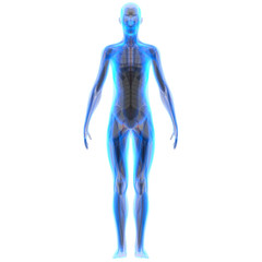 Human Male Muscle Body