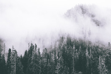 Fog Wisps B&W - 128699573